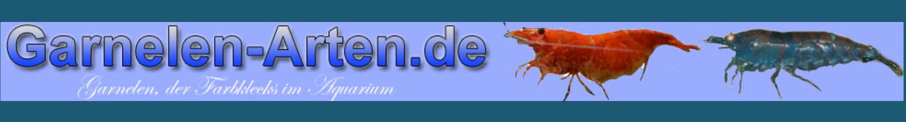 garnelen-arten.de
